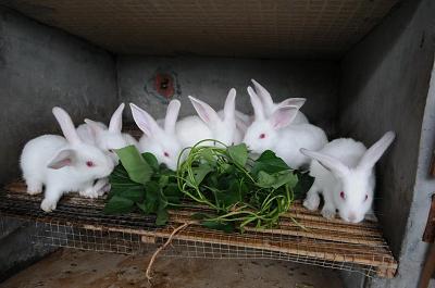 兔子1.png