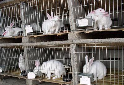 兔子2.png